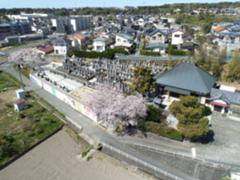 福応寺と満開の桜を空撮