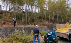 竹の間伐作業をしています